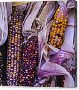Indian Corn Harvest Canvas Print