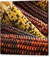 Indian Corn Canvas Print