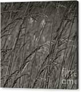 Indian Grass In The Wind Canvas Print