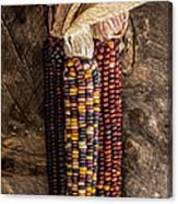 Indian Harvest Corn Canvas Print