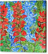 Indian Paintbrush And Bluebonnets Canvas Print