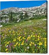 Indian Peaks Wildflower Meadow Canvas Print