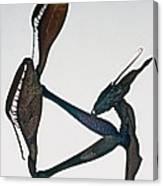Indian Rose Mantis Gonglus Gongylodes Wondering Violin Mantis  1 Of 3 Canvas Print