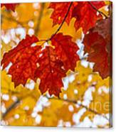 Indian Summer Trees Canvas Print
