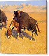 Indians Simulating Buffalo Canvas Print