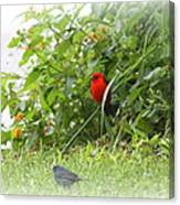 Indigo Bunting And Scarlet Tanager 2 Canvas Print