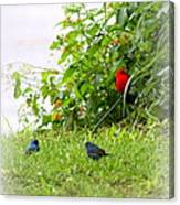 Indigo Bunting And Scarlet Tanager Canvas Print