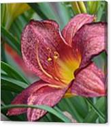Inflamed - Lily Canvas Print