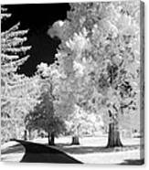 Infrared Delight Canvas Print