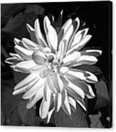Infrared - Flower 03 Canvas Print