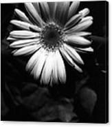 Infrared - Flower 05 Canvas Print