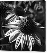 Infrared - Lucky Star Canvas Print