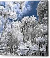 Infrared Pond And Reflections 2 Canvas Print