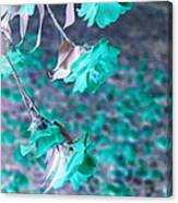 Infrared Roses Canvas Print