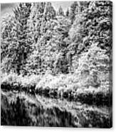 Infrared Trees Canvas Print
