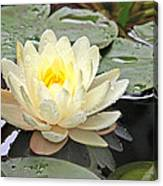 Inner Glow - White Water Lily Canvas Print