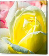 Inner Light Of Rose Canvas Print