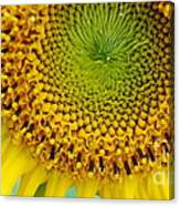 Inner Peace Forms Within This Sweet Yellow Sunflower Canvas Print