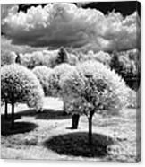 Innisfree Garden Canvas Print