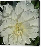 Innocent White Dahlia  Canvas Print