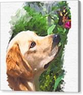 Inquisitive Hoggie Canvas Print