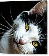 Inquisitive Kitty Canvas Print