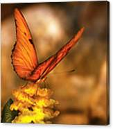 Insect - Butterfly - Just A Bit Of Orange  Canvas Print