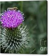 Insect On A Thistle Canvas Print