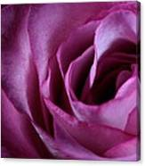 Inside A Rose Canvas Print