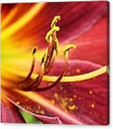 Inside Of A Lily Canvas Print