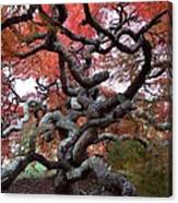 Inside The Japanese Maple Canvas Print