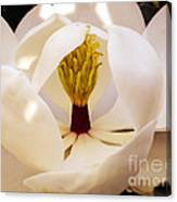 Inside The Magnolia Canvas Print