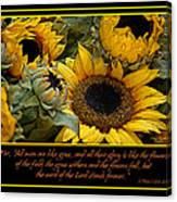 Inspirational Sunflowers Canvas Print