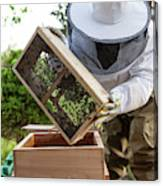 Installing Bees In A Hive Canvas Print