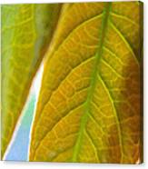 Interesting Leaves - Digital Painting Effect Canvas Print