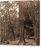 Interesting Tree Canvas Print