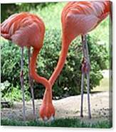 Intertwined Flamingoes Canvas Print