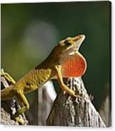 Intimidated Anole Canvas Print