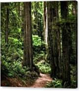Into The Magical Forest Canvas Print