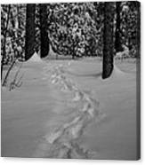 Into The Woods Pisgah Forest Black And White Canvas Print