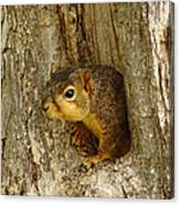 iPhone Squirrel In A Hole Canvas Print