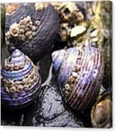 Iridescent Purple Seashells Canvas Print