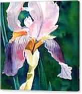 Iris 1 Canvas Print