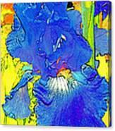 Iris 10 Canvas Print