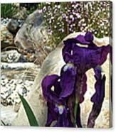 Iris 14 Canvas Print