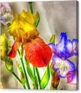 Iris #18 Canvas Print
