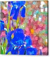 Iris 22 Canvas Print