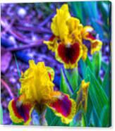 Iris #58 Canvas Print