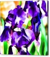 Iris 63 Canvas Print