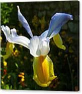 Iris 7 Canvas Print